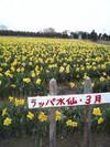 Ohanami_005